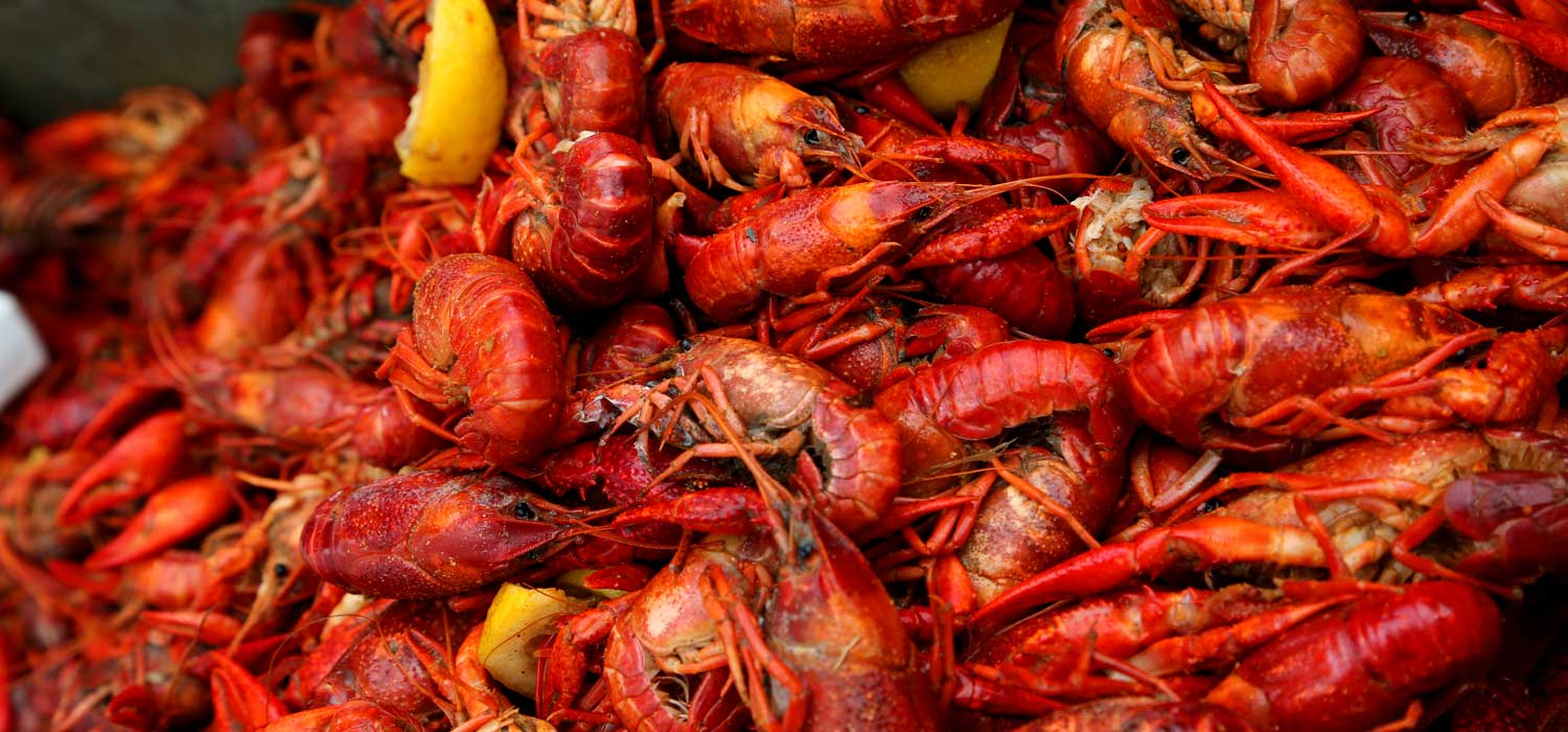 gallery-crawfish